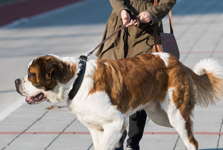 Health Experts Tips To Save Life From Dog Bite, Stray Dogs