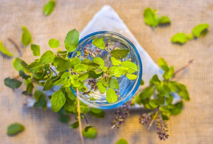 amazing benefits of tulsi leaves remedy for hair fall