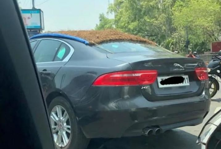 Jaguar XE thatched roof