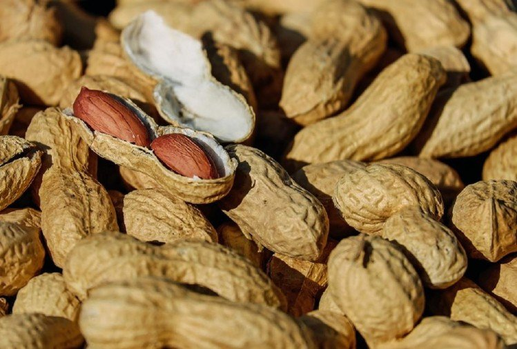 eating more than 100 gram peanut is harmful