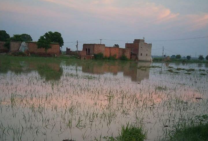 टोकी गांव में डूबी फसल व गांव तक पहुंचा पानी