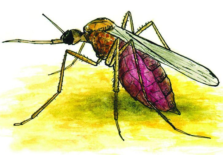 मौसम के बदलते मिजाज के साथ ही डेंगू मच्छर का डंक अब तेजी से लोगों को लगने लगा है