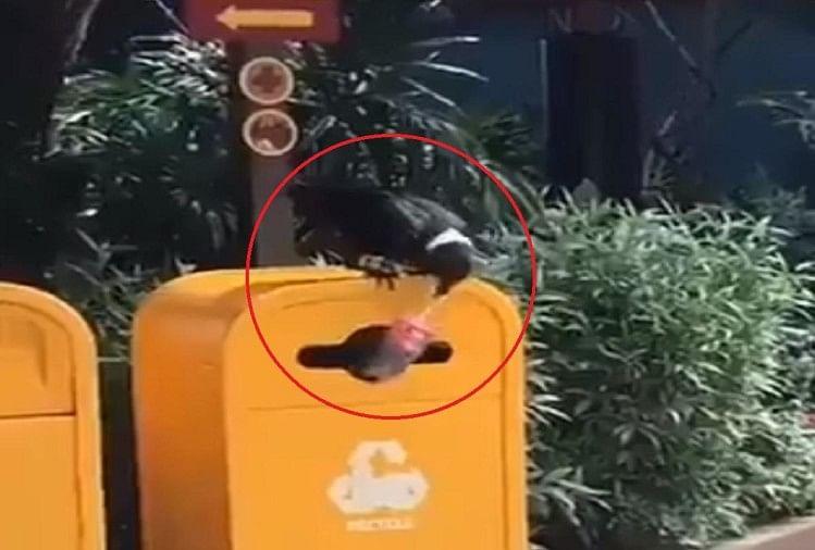 कौवे ने प्लास्टिक बोतल को उठाकर डस्टबिन में डाला
