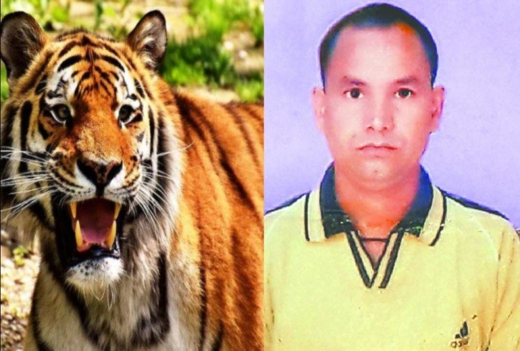 Tiger Attack on forest guard and killed come back After Five Hours in kotdwar
