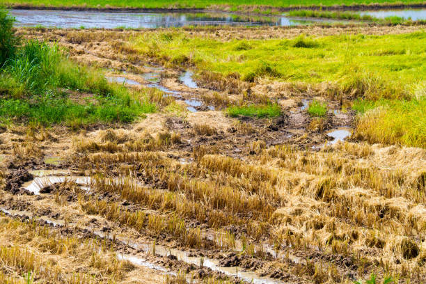 Soil treatment protects Rabi crops from many diseases