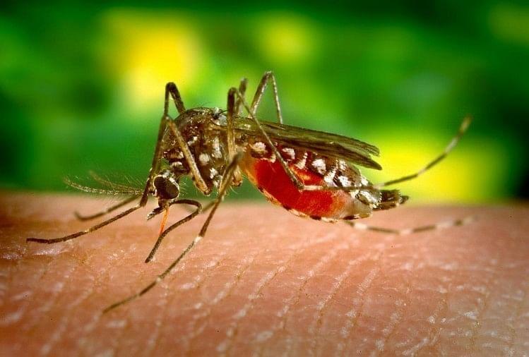Dengue Serotype 2 Symptoms And Prevention, All You Need To Know - अलर्ट: देश में डेंगू के सबसे खतरनाक स्ट्रेन 'सीरोटाइप-2' का प्रकोप, जानिए इसके लक्षण और बचाव के तरीके - Amar