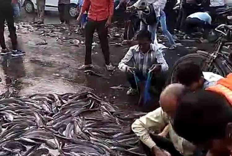झोले में मछलियां भरते हुए राहगीर