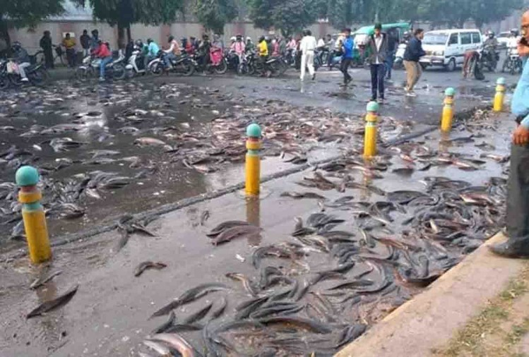 सड़क पर फैली मछलियां