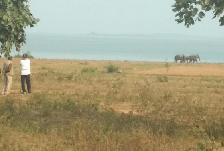 सोनभद्र में हाथियों का झुंड सोमवार की रात फिर रिहंद जलाशय के किनारे पहुंचा और बच्चे का शव न मिलने पर उत्पात मचाया। हाथियों ने फसलों को नष्ट करने के अलावा तीन घरों को भी क्षतिग्रस्त कर दिया...