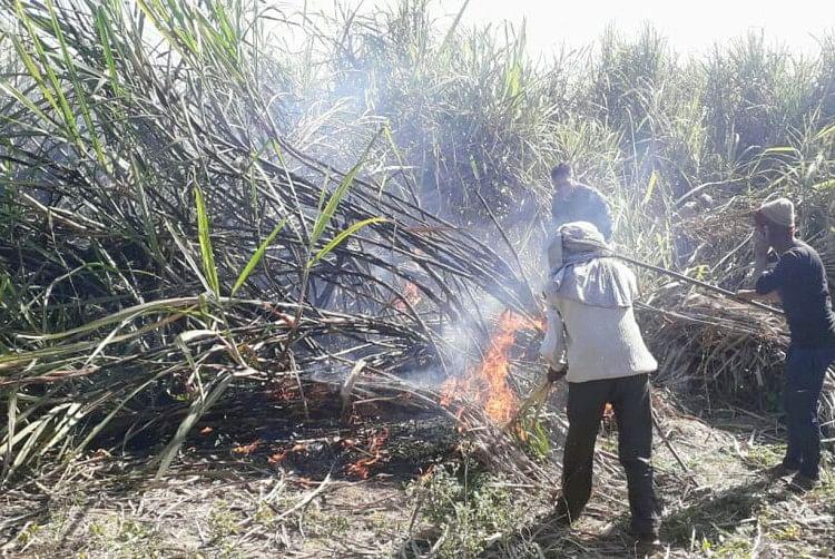 संदिग्ध परिस्थितियों में 13 बीघा ईख में आग लगी