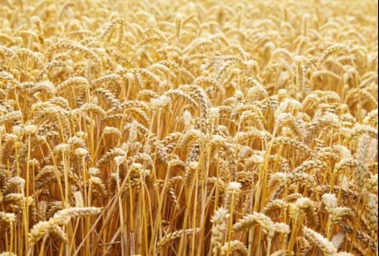 सरकार  किसानों से 15 अप्रैल से खरीदेगी गेहूं