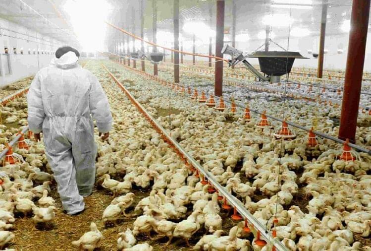 कोरोना के बीच जापान पर बर्ड फ्लू का कहर, 18 लाख से ज्यादा मुर्गियों को मारा जाएगा