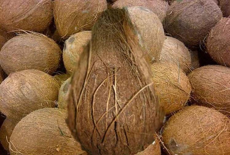 हिंदू धर्म में नारियल को बहुत शुभ माना जाता है।