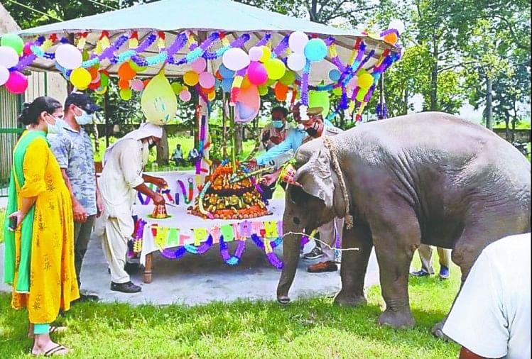 हाथी का बच्चा 'सावन' बनेगा कॉर्बेट नेशनल पार्क का ब्रांड एंबेसडर, फेसबुक पर खुलेगा एकाउंट