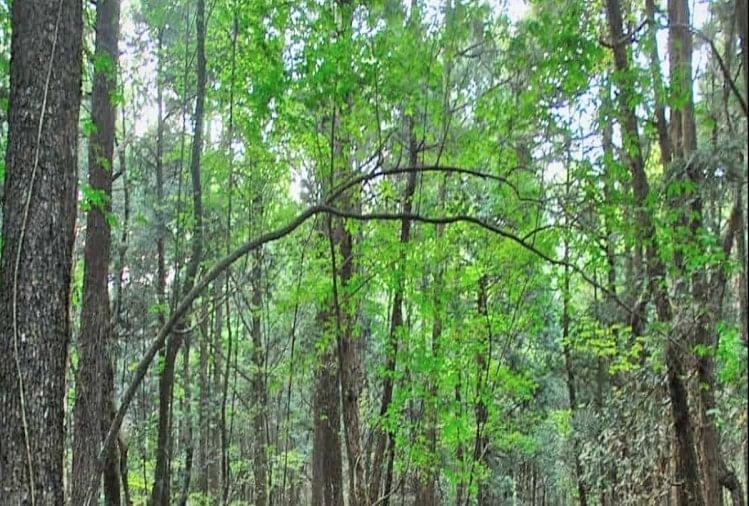 प्रदूषण के स्तर को नियंत्रित व सौंदर्यीकरण के उद्देश्य से बीबीएन में बनेंगे छोटे जंगल