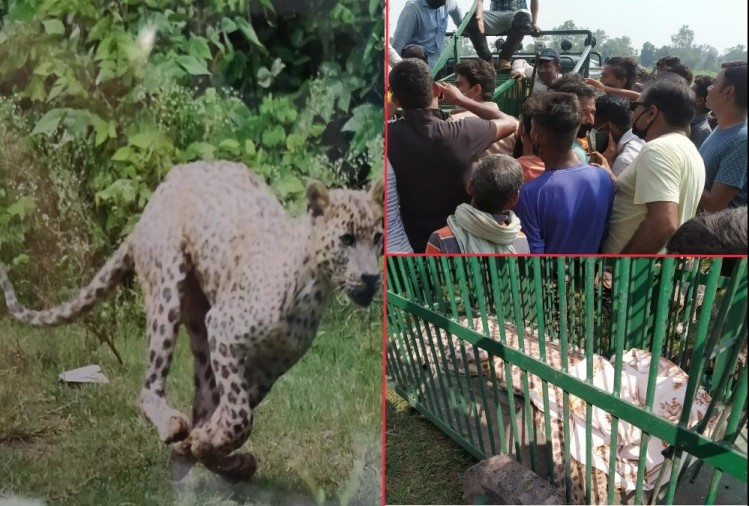 Angry Female Leopard Attack on woman and youth, Rescue Done By Six Hours in rishikesh, Photos