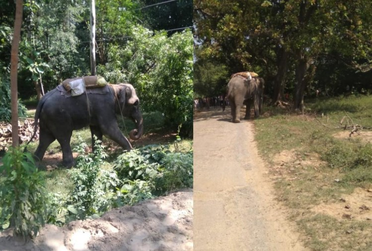 An elephant got angry on Mahawat in Sultanpur.