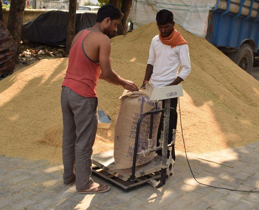 रुद्रपुर में टीवीएस में क्रय केंद्र पर धान तौलते पल्लेदार।