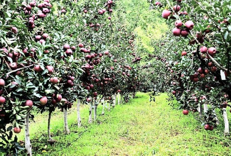 नौणी विवि से 2,500 से अधिक किसानों ने खरीदे 90,000 पौधे