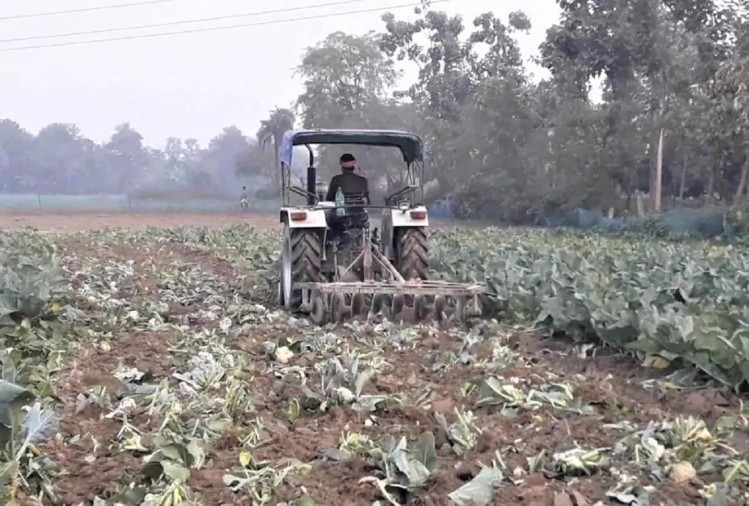 The farmer drives a tractor in his cabbage farm.