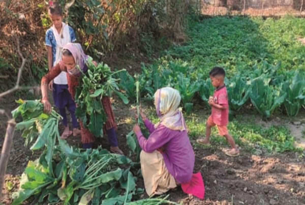 थारू समुदाय की पुतली अपने खेत से सब्जियां तोड़ते हुए