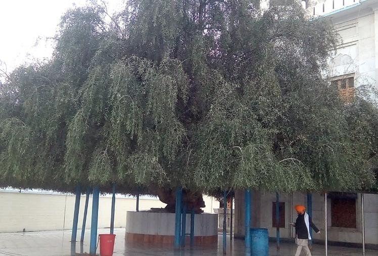 वह पेड़, जिस पर गुरु गोबिंद सिंह जी ने अपना घोड़ा बांधा था।