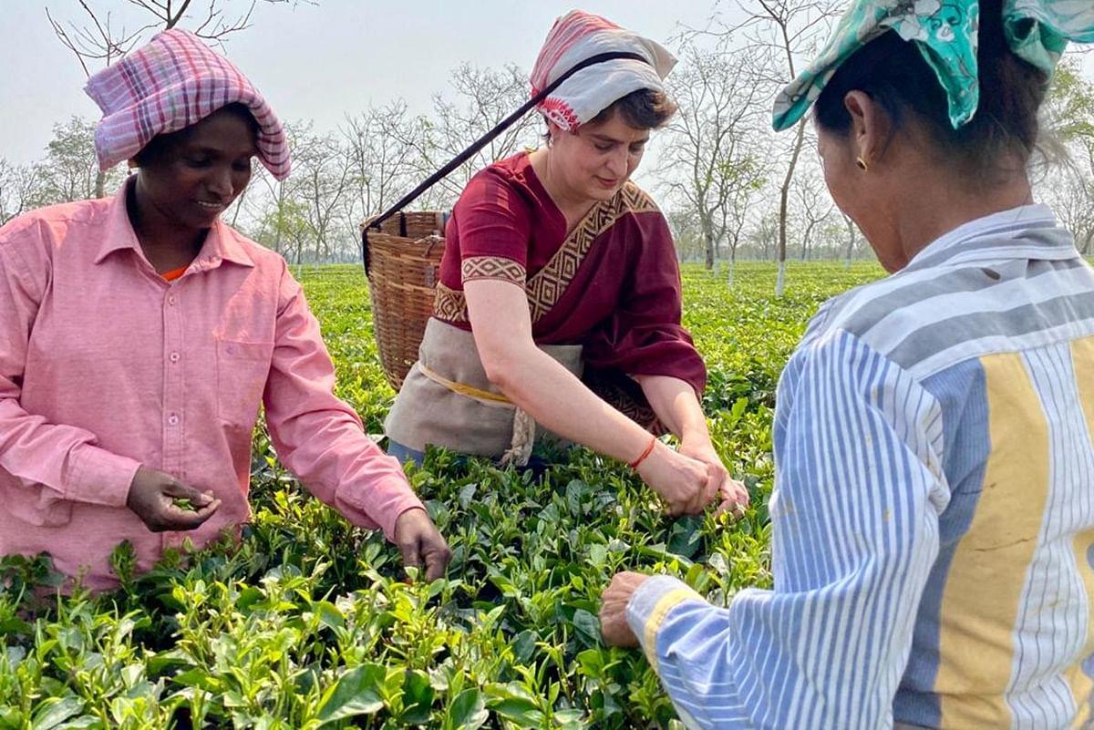 Assam Assembly Election Priyanka Gandhi During Her Visit Met With Tea  Garden Workers Temple Camopaign Rally Congress Bjp - असम में प्रियंका: चाय  बागान के मजदूरों से की मुलाकात, कार्यकर्ताओं के साथ
