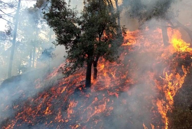उत्तराखंड : जंगलों को आग से बचाने के लिए पुरस्कार का रास्ता अपनाएगीसरकार,सबसे पहले आग बुझानेपर मिलेंगे एक लाख