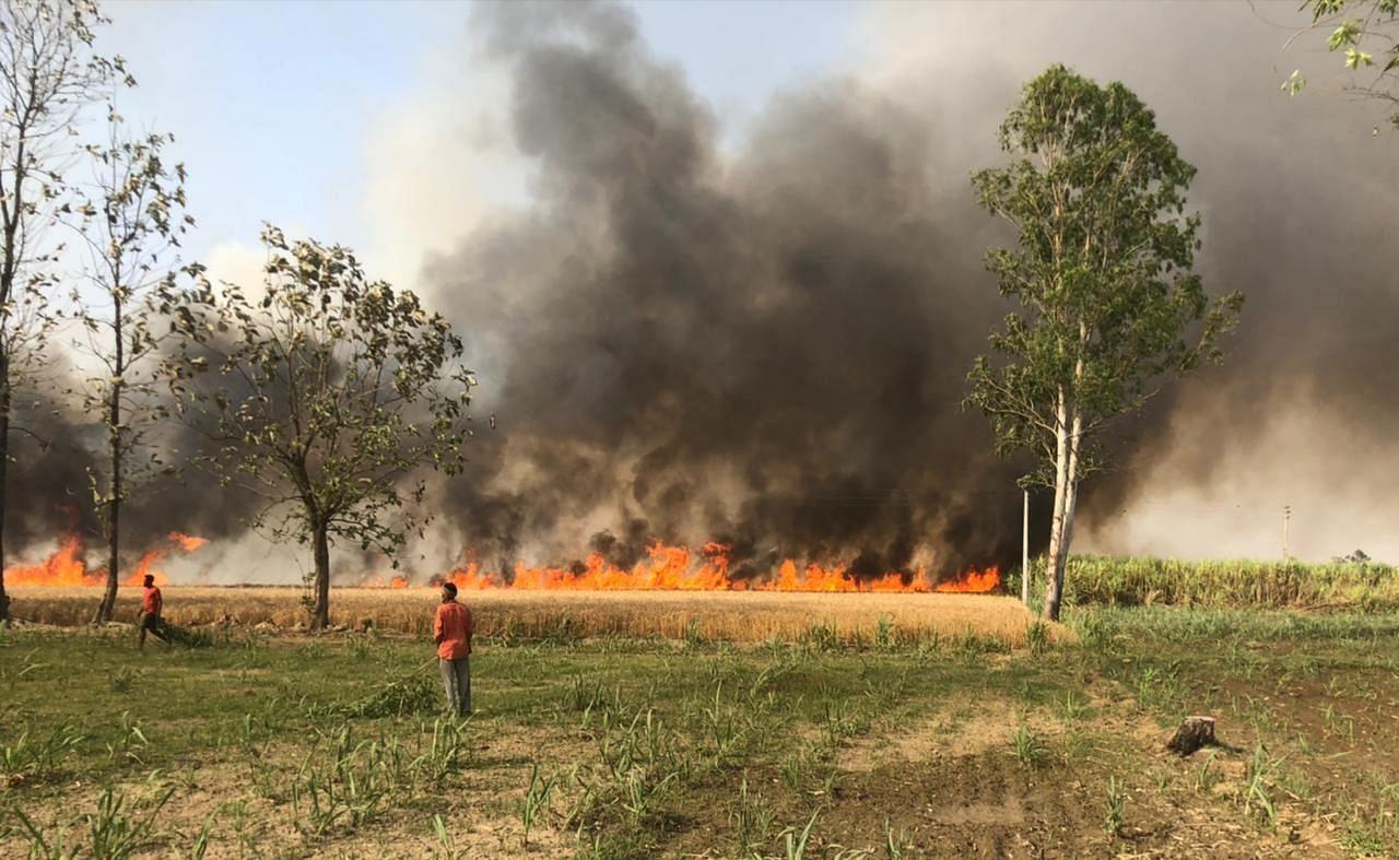 खटीमा के जंगल जोगीढेर में गेहूं के खेत में लगी आग।