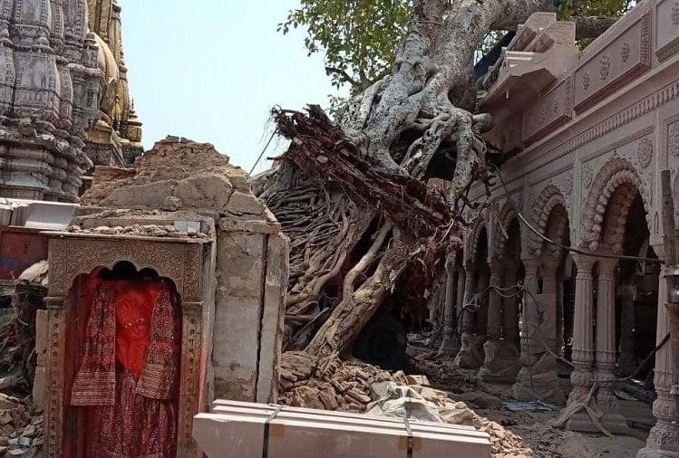 A Huge Banyan Tree Collapses In The Akshayavat Hanuman Temple Located In  The Vishwanath Temple Enclosure In Varanasi - वाराणसी : विश्वनाथ मंदिर  परिक्षेत्र स्थित अक्षयवट हनुमान मंदिर में मौजूद ...