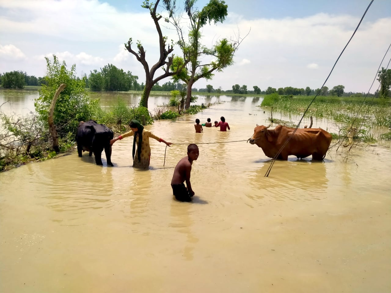 छाछरी मोड़ क्षेत्र के गांव सलेम में गंगा के पानी से जलमग्न हुई फसल