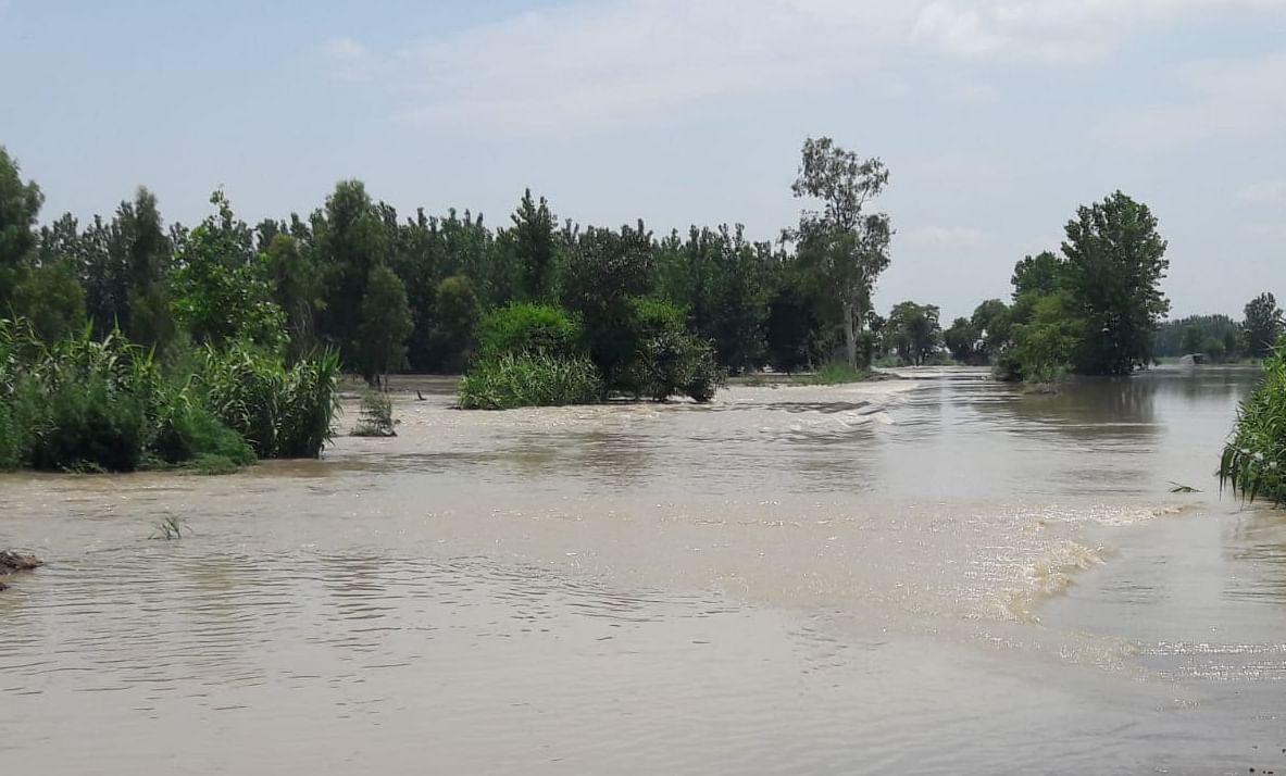 चांदपुर जलीलपुर खादर क्षेत्र में गंगा का जल स्तर बढ़ने से खेतों में भरा गंगा का पानी।