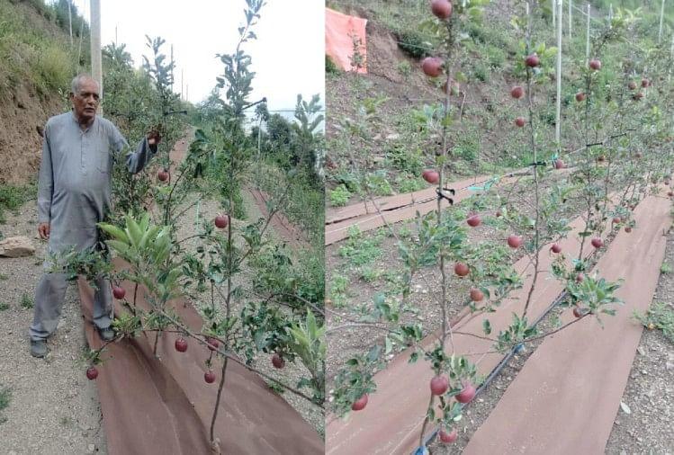 पांच महीने में पौधों ने दे दी सेब की फसल, 150 रुपये प्रति किलो मिले दाम