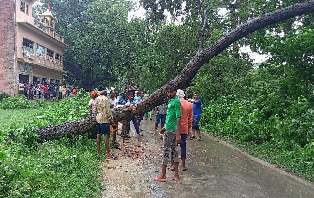 गडवारा के धरमपुर रोड पर बारिश व तेज हवा से गिरे पेड़ को हटाते ग्रामीण। संवाद