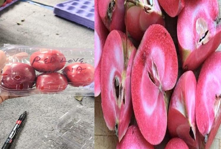 रेड लव सेब की बाजार में बड़ी छलांग, 500 रुपये किलो बिका