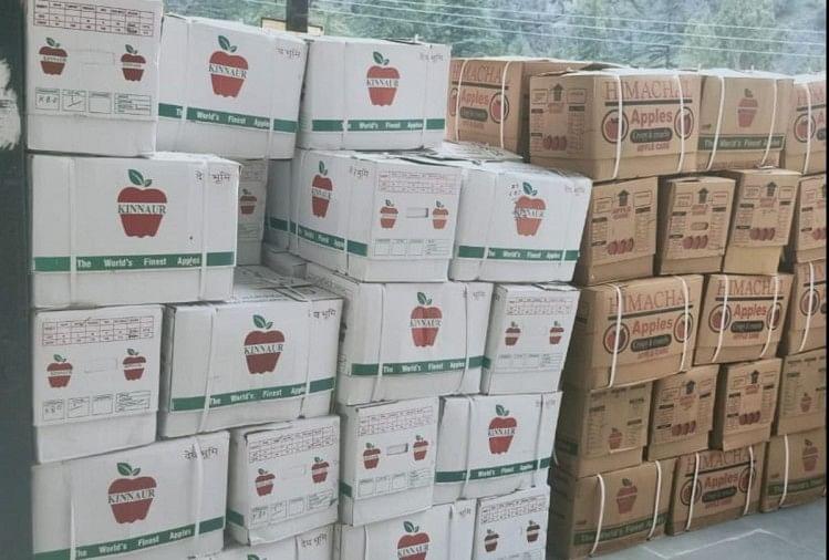 बागवान मायूस :  किन्नौरी सेब भी वाजिब दाम को तरसा