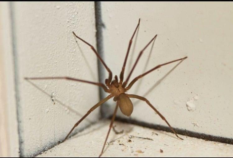 Dangerous Spiders: ये हैं विश्व की सबसे खतरनाक मकड़ियां, पल भर में ले सकती