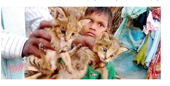 6 year old boy plays with cubs supposing them as baby cat