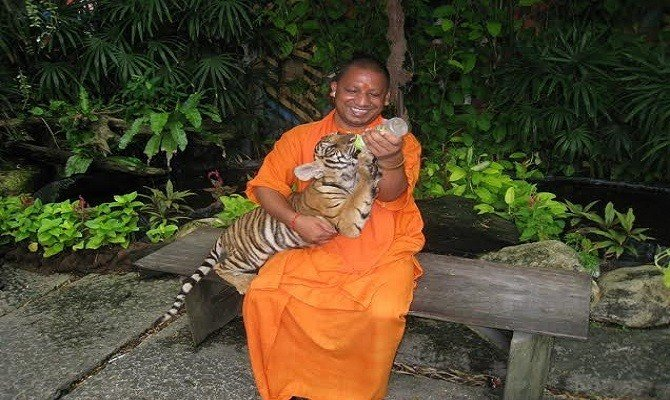 Image result for yogi adityanath Tiger