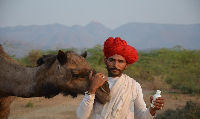 Image result for ऊंटनी का दूध