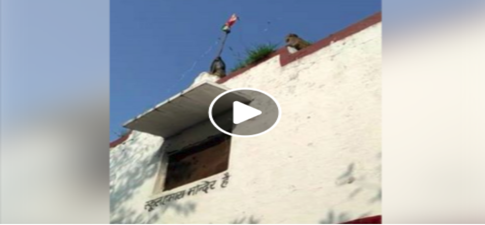 Flag Hosting by monkey in ambala video Goes Viral on social Media