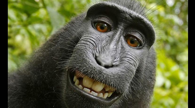Monkey selfie case: British photographer settles with animal charity