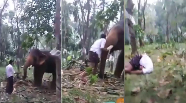 Drunk Kerala man tries to kiss elephant, video going viral