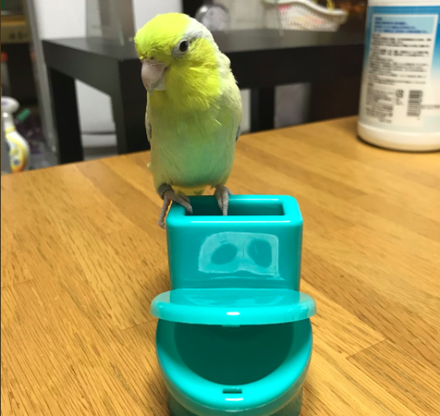 In Japan, there is toilet ready only for parrot