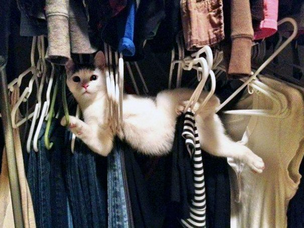 viral content funny photos of idiot cats