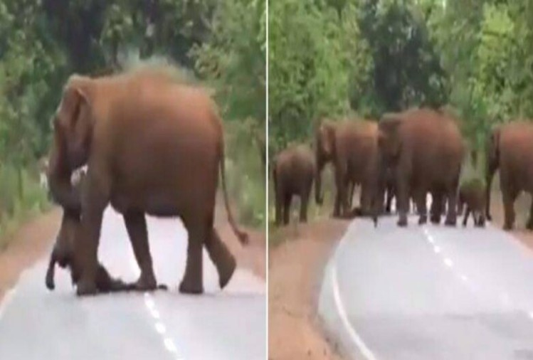 elephants funeral video viral on social media