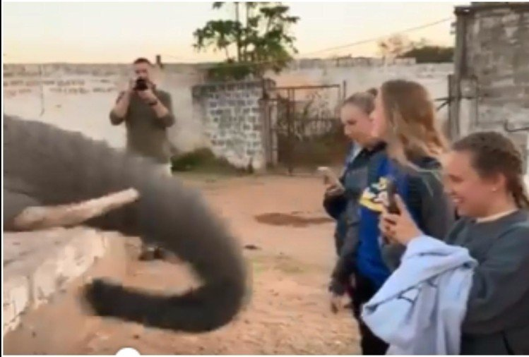 elephant attack on this girls while taking selfie without permission