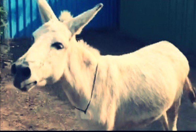 viral video of donkey singing on social media