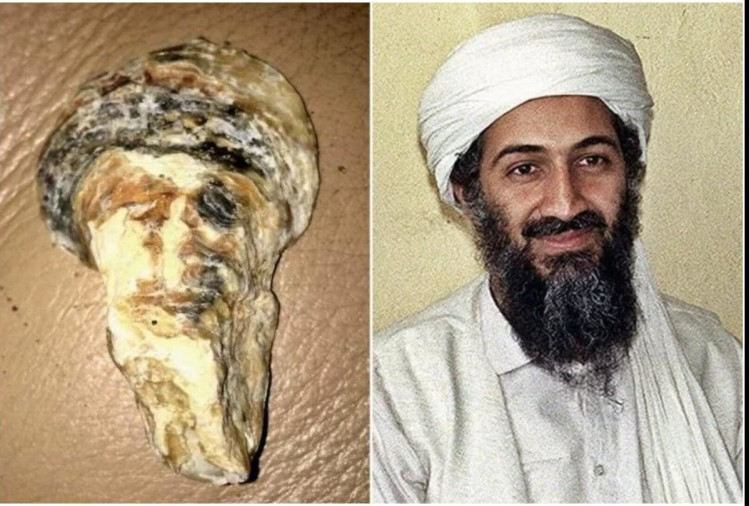 women find a shell who looks like osama bin laden face