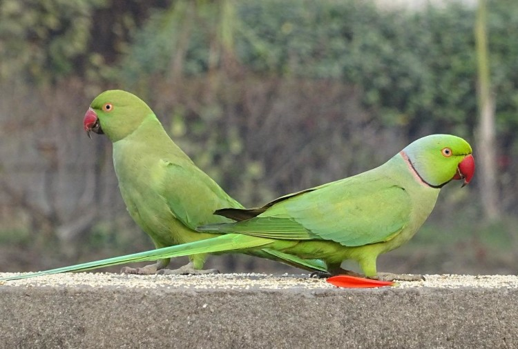 parrots in cage appeared in Delhi court